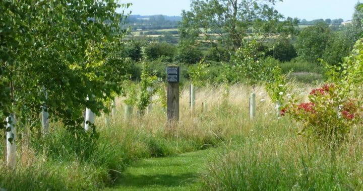 Path through Growing Woodland