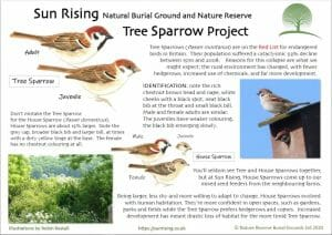 Tree Sparrow Fact Sheet