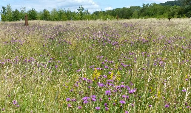 Wildflower Meadow to Young Woodland